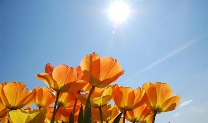 mooi voorjaar
